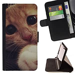 DEVIL CASE - FOR Apple Iphone 5C - Cute Sad Frightened Kitten Cat Paw Eyes - Style PU Leather Case Wallet Flip Stand Flap Closure Cover