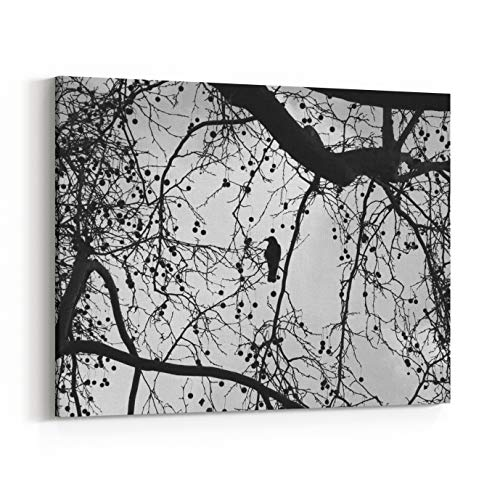 Rosenberry Rooms Canvas Wall Art Prints - Silhouette of Lonely Raven Sitting On Sycamore Tree with Bare Branches and Dry Fruits Winter in The Park Evening Lighting Loneliness Concept (30 -