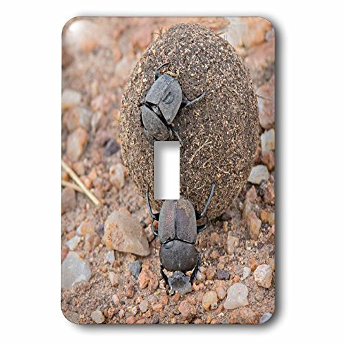 3dRose Danita Delimont - Insects - Africa, Tanzania, Serengeti. Pair of dung beetles rolling a dung ball. - Light Switch Covers - single toggle switch (lsp_256961_1) Dung Ball