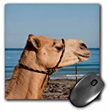 Danita Delimont - Camels - Australia, Cable Beach. Camel along Cable Beach. - MousePad (mp_226164_1)