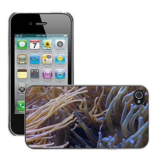Bild Hart Handy Schwarz Schutz Case Cover Schale Etui // M00134613 Anemonen Tentacle Seeanemonen // Apple iPhone 4 4S 4G
