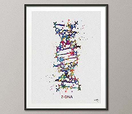 Amazon.com: DNA Molecule Z-DNA Watercolor Print Medical Wall Art ...