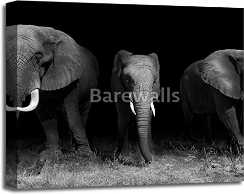 Elephants In Black And White Gallery Wrapped Canvas Art (20in. x 24in.) by barewalls