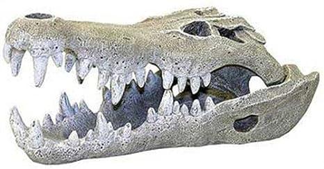 Amazon Com Exotic Environments Nile Crocodile Skull Aquarium