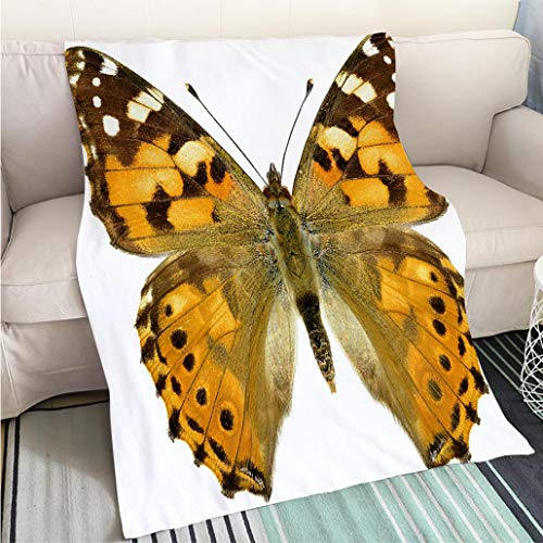 BEICICI Art Design Photos Cool Quilt Isolated Painted Lady Butterfly Hypoallergenic - Plush Microfiber Fill - Machine Washable - Painted Lady Butterfly Pictures