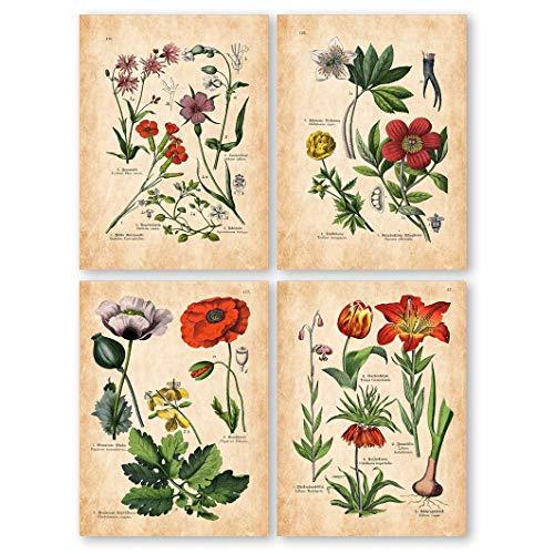 (Botanical Prints Set, Botanical Illustration, Botanical print vintage, Vintage Fruit Print, Botanical Poster, Botanical Wall Art, Home Decor, Wal Art, Kitchen Decor - UNFRAMED)