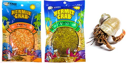 Nature Gift Store 1 Live Pet Hermit Crab+4oz Food+Treats Bundle: Purple Pincher Land Crab