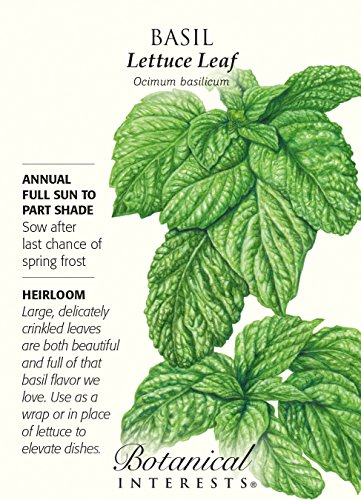Lettuce Leaf Heirloom Basil Seeds - 2 Grams Basil Lettuce Leaf
