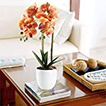 HO2NLE-21-inches-Artificial-Orchid-Potted-Plant-Fake-Bonsai-Flower-Arrangements-Real-Touch-PU-Faux-Phaleanopsis-Branches-with-White-Ceramics-Pot-Home-Office-Bedroom-Table-Centerpieces-Decor-Orange