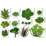 Fake-Foliage-14-pcs-Assorted-Large-Small-Size-Artificial-Unpotted-Succulents-Reindeer-Moss-Mixed-Faux-Succulent-Picks-Floral-Arrangement-Home-Decor-Accent-DIY-Craft-Plants-Decoration