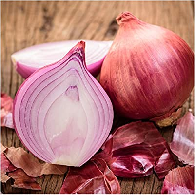 Package of 450 Seeds, Red Burgundy Onion (Allium cepa) Non-GMO Seeds by Seed Needs