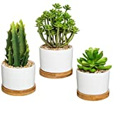 Vibrant Artificial Succulent Potted Plants in Round White Ceramic Pot with Bamboo Saucer, Set of 3 Review