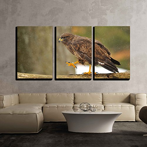 wall26 3 Piece Canvas Wall Art - Common Buzzard Walking on Branch When It is Snowing - Modern Home Decor Stretched and Framed Ready to Hang - 16