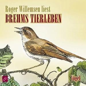 Vögel (Brehms Tierleben) Hörbuch