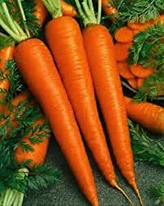 500 seeds Imperator 58 Carrot Non-GMO Heirloom New seed for 2015