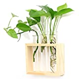 Ivolador Wall Mounted Hanging Glass Vase Test Tube Flower Vase Tabletop Glass Terrarium Wooden Stand Perfect for Propagating
