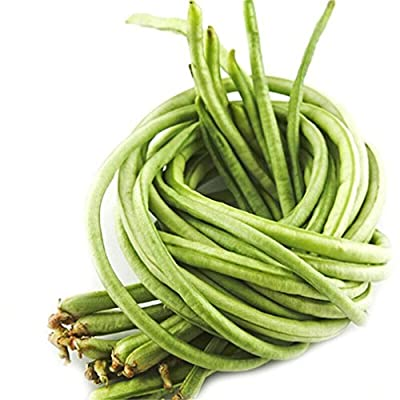 Vastravel Yard Long Bean Light Green Climbing Bean 100 Seeds
