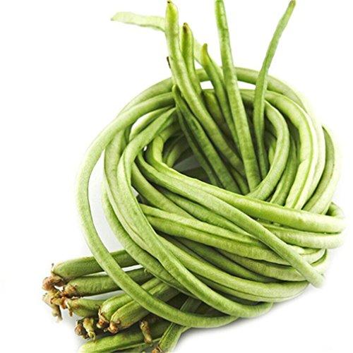 Vastravel Yard Long Bean Light Green Climbing Bean 100 Seeds