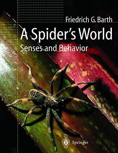 A Spider's World: Senses and Behavior