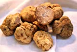 10 Gr Seeds Spores of Truffle White Garden Mushrooms Kit / Fungus