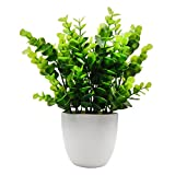 OFFIDIX Mini Plastic Eucalyptus Artificial Plants with Vase for Office Desk, Home and Friends' Gift Fake Plant with Plastic Pots for Home Decoration for Kids (Green)