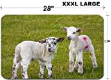 Luxlady Large Table Mat Non-Slip Natural Rubber Desk Pads Newborn Spring Lamb twins in rural english meadow IMAGE ID 6606077
