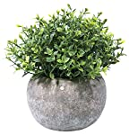 Hibery Mini Fake Green Grass Small Plastic Artificial Faux Potted Plants for House Home Decor