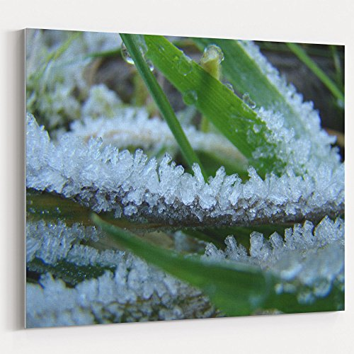 (Westlake Art - Leaf Frost - 16x20 Canvas Print Wall Art - Canvas Stretched Gallery Wrap Modern Picture Photography Artwork - Ready to Hang 16x20 Inch (D41D8))