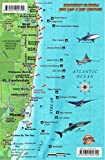 Southeast Florida Dive Map and Coral Reef Creatures Guide Franko Maps Laminated Fish Card