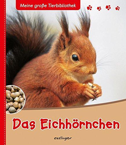 Das Eichhörnchen (Meine große Tierbibliothek)