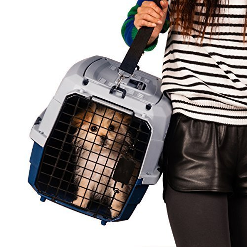 Favorite Portable Two Door Pet Carrier 23 Inch by 15.5 Inch by 13.5 Inch, Free Strap, Blue by Favorite (Image #2)