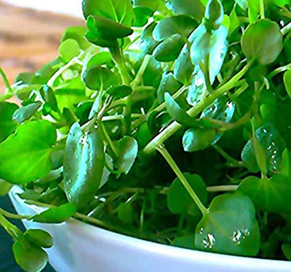Co Upland Cress Watercress (Nasturtium Officinale) Seeds   Non GMO Seeds
