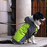 Alfie Pet by Petoga Couture - Berny Raincoat (for Dogs and Cats) - Color Green, Size: XL
