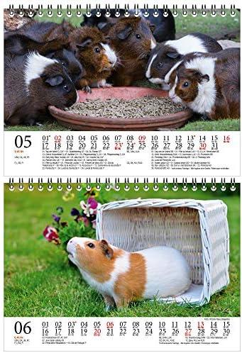 Meerschweinchenzauber DIN A5 Tischkalender für 2021 Meerschweinchen - Geschenkset Inhalt: 1x Kalender, 1x Weihnachts- und 1x Grußkarte (insgesamt 3 Teile)