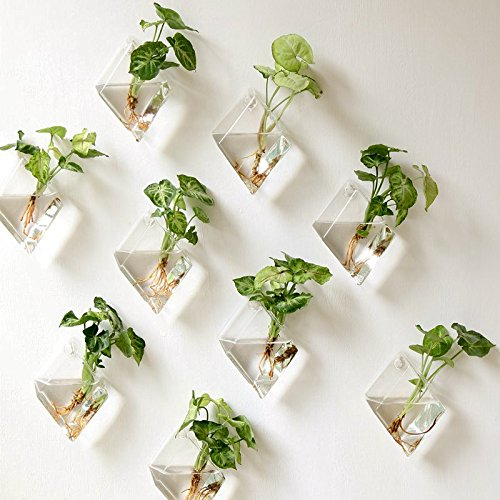 - Mkono 2 Pack Wall Hanging Plant Terrarium Glass Planter, Diamond