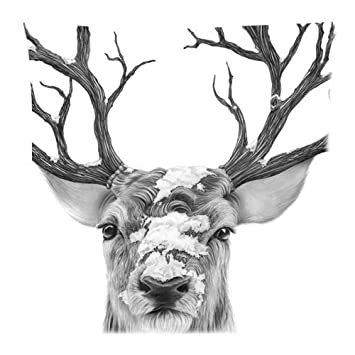 Amazon.com: Art cabeza de ciervo Face impresión Ciervo Buck ...