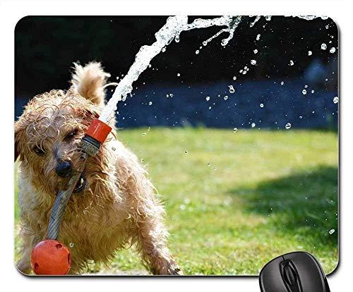 (Mouse Pads - Dog Garden Terrier Fun Norfolk Terrier Animal)