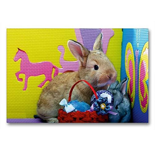 CALVENDO Toile en Textile de qualité supérieure - Motif Lapins Humoristiques - 90 x 60 cm