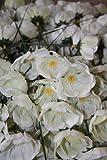 20 Kunststoff Steck-Christrosen Blumen für den Adventskranz