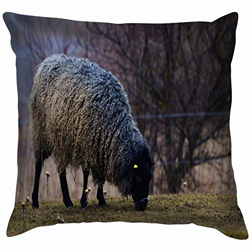 Gotland Sheep On Meadow Typical Swedish Animals Wildlife Animal Pillow Case Throw Pillow Cover Square Cushion Cover 24X24 Inch