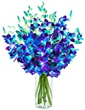 #8: Blooms2door Exotic Sapphire Orchid Bouquet Of Fresh Orchids From Thailand With Vase, 20 Blue Dendrobium