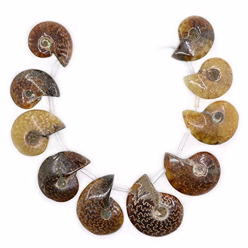 Justinstones 10pcs Side Drilled Natural Whole Ammonite Fossil Loose Gemstone -