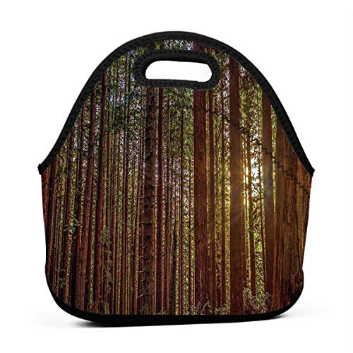 Lunchbox Totebox Multi-Purpose Compact Lunch Holder Portable Gourmet Tote Pouch Container Nature Redwood Forest In California Grocery Container for Women Men Kids, Work School - Redwood Holder Drink