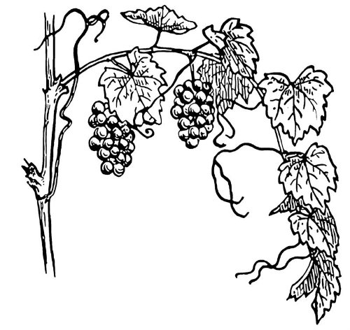 Grapevine Decoration - 7