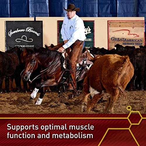 Vita Flex Lactanase Performance Supplement for Horses, Supports Healthy Muscle Function, Case of 12 by Vita Flex (Image #2)