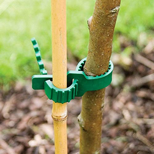 Clip Plant - Adjustable Garden Reusable Plastic Plants Cable Ties Tree Climbing Support Horticulture Planting - Cable Rain Starter Organic Tools Fence Garden Fairy Plants Barrels Climbing Sup -