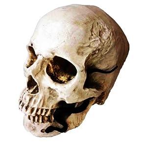 頭蓋骨 模型 ミニヘビ 付き AmanoSongオリジナル2点セット