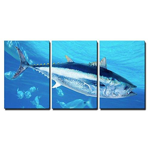 wall26 - 3 Piece Canvas Wall Art - Bluefin Tuna Thunnus Thynnus Saltwater Fish in Mediterranean - Modern Home Decor Stretched and Framed Ready to Hang - 24