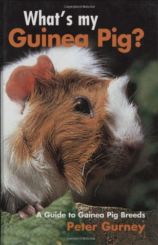 what-s-my-guinea-pig-a-guide-to-guinea-pig-breeds
