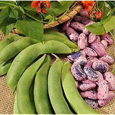 Countia Garden - 100pcs Bean Seeds Organic Climbing French Bean Seeds Non-GMO Vegetable Seeds Green Beans Seeds for Planting : Garden & Outdoor